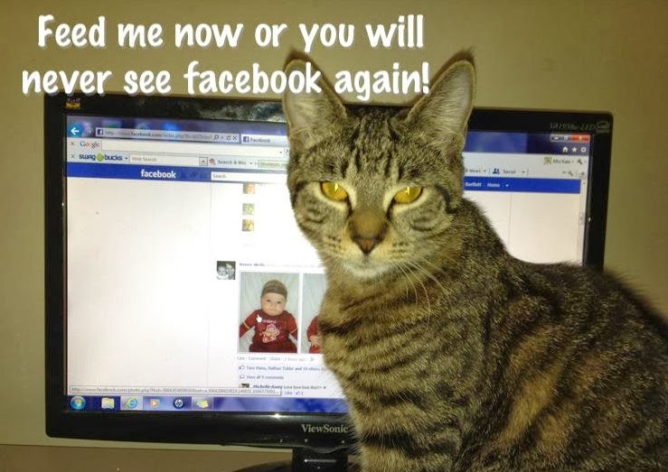 Cat and Facebook Meme
