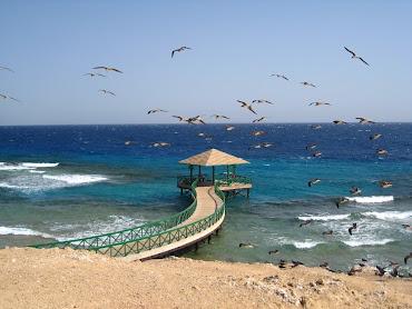 #17 Sharm El Sheikh Wallpaper