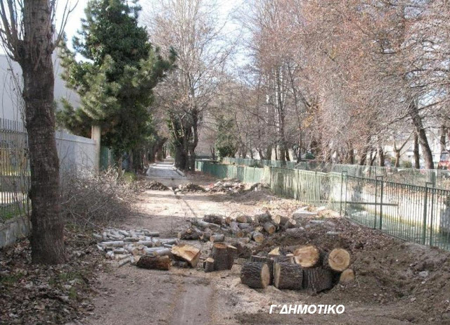 Ρημάξανε τα δέντρα στο 3ο Δημοτικό