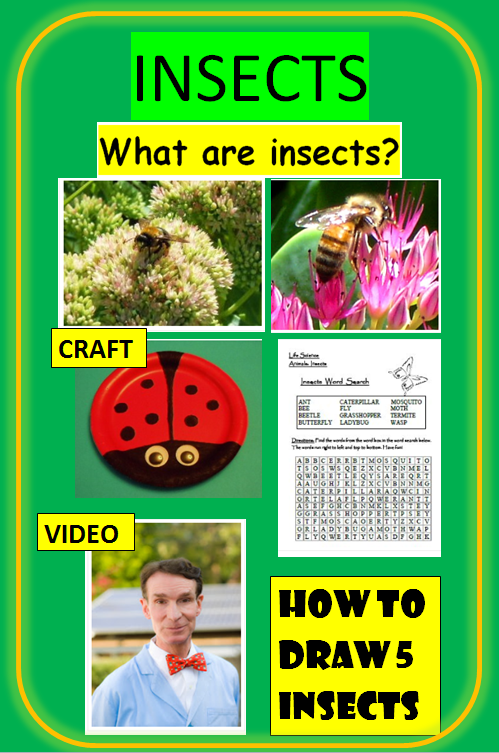 Insect Lesson for Kids: Facts & Habitats | Study.com