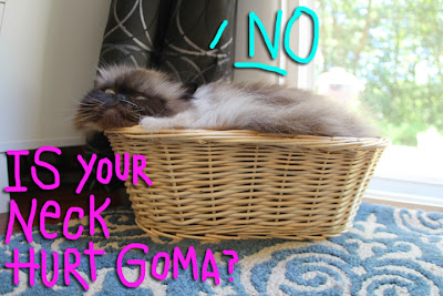 cat in basket03