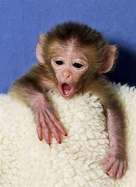 This Post Include Cute Baby Monkey WallpapersNice PhotosChild ImagesBeautiful Child StillsLittle PicturesBaby