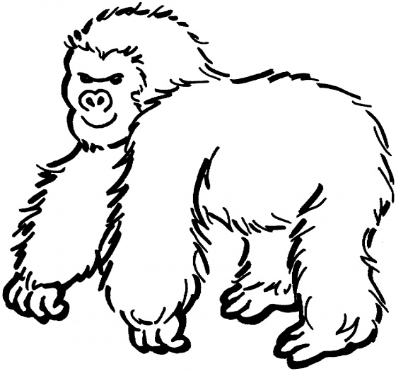 gorilla coloring pages - photo#28