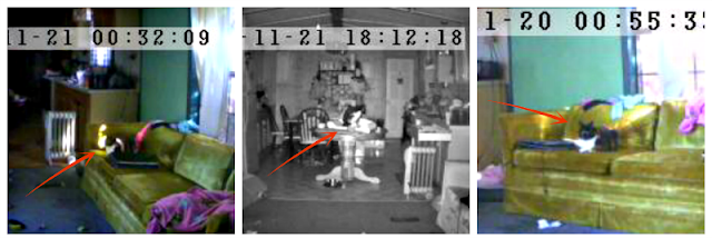 captured images from pet monitoring camera