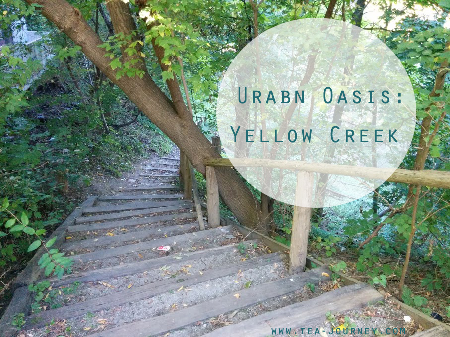Urban Oasis: Yellow Creek at St.Clair East toronto nature images collection balance peace connection
