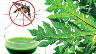 Dengue fever Food