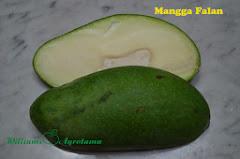 Mangga Falan