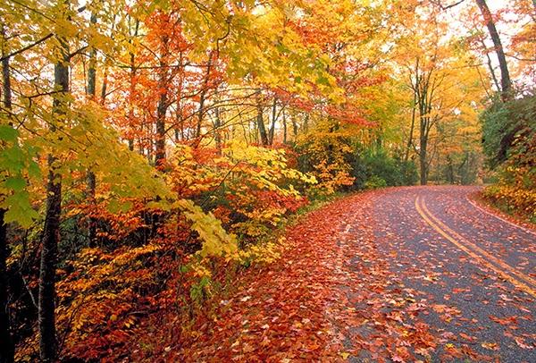 my favorite season is fall essay