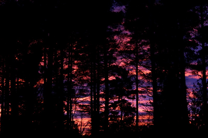 Dark forest and a purple sky