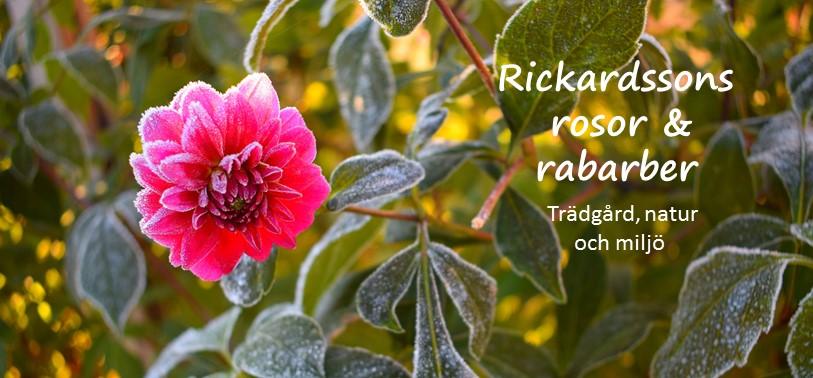 Rickardssons Rosor & Rabarber