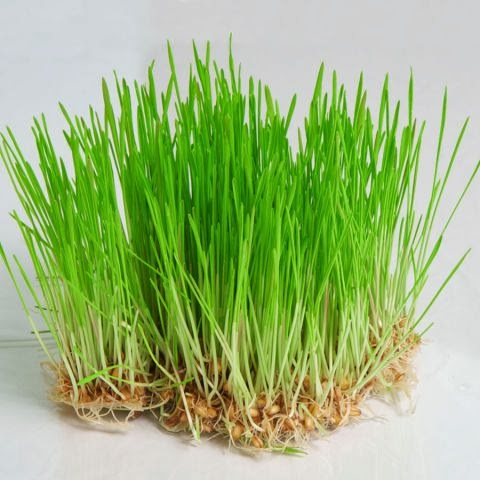 трава от паразитов в кишечнике