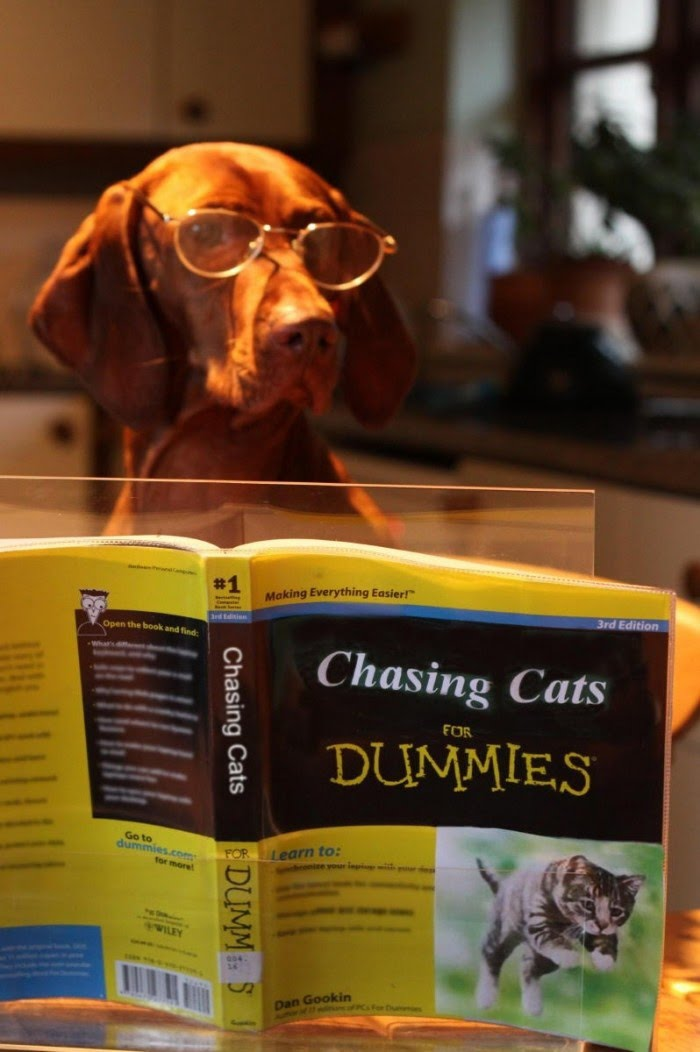 Chasing Cats for Dummies