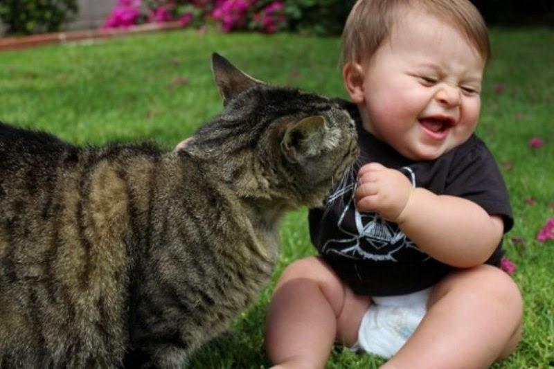Foto bayi lucu sedang asyik bermain dengan kucing