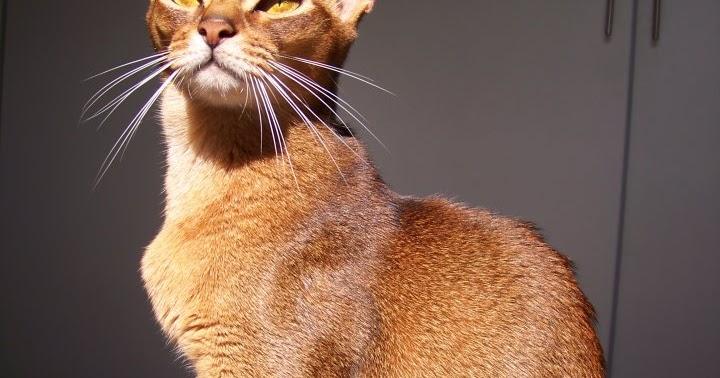 natures instinct cat food