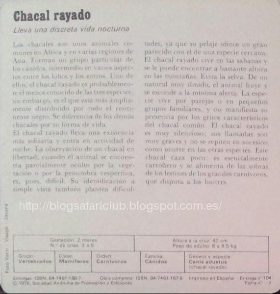 Blog Safari Club, características del Chacal rayado