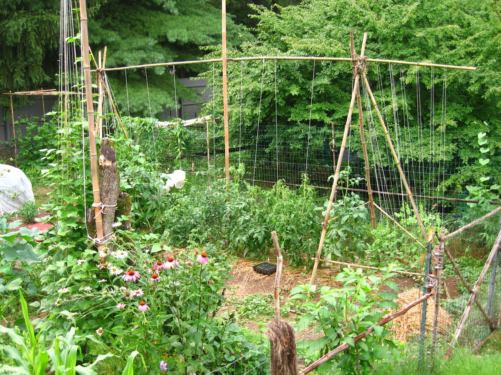 Vegetable garden trellis ideas photograph vegetable garden for Garden trellis ideas