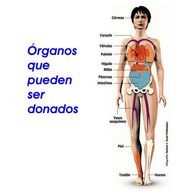 Resultado de imagen para Donación y trasplante de órganos