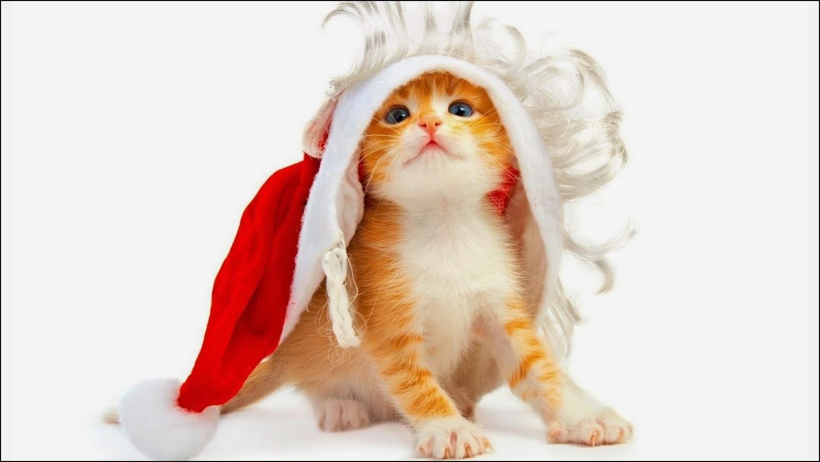 Gato disfrazado para Navidad