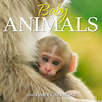 Baby Animals 2016 Desk Calendar
