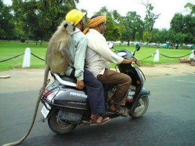 Indian funny pic,funny pic,facebook funny pic,latest funny pic,transport funny pic ,monkey funny pic