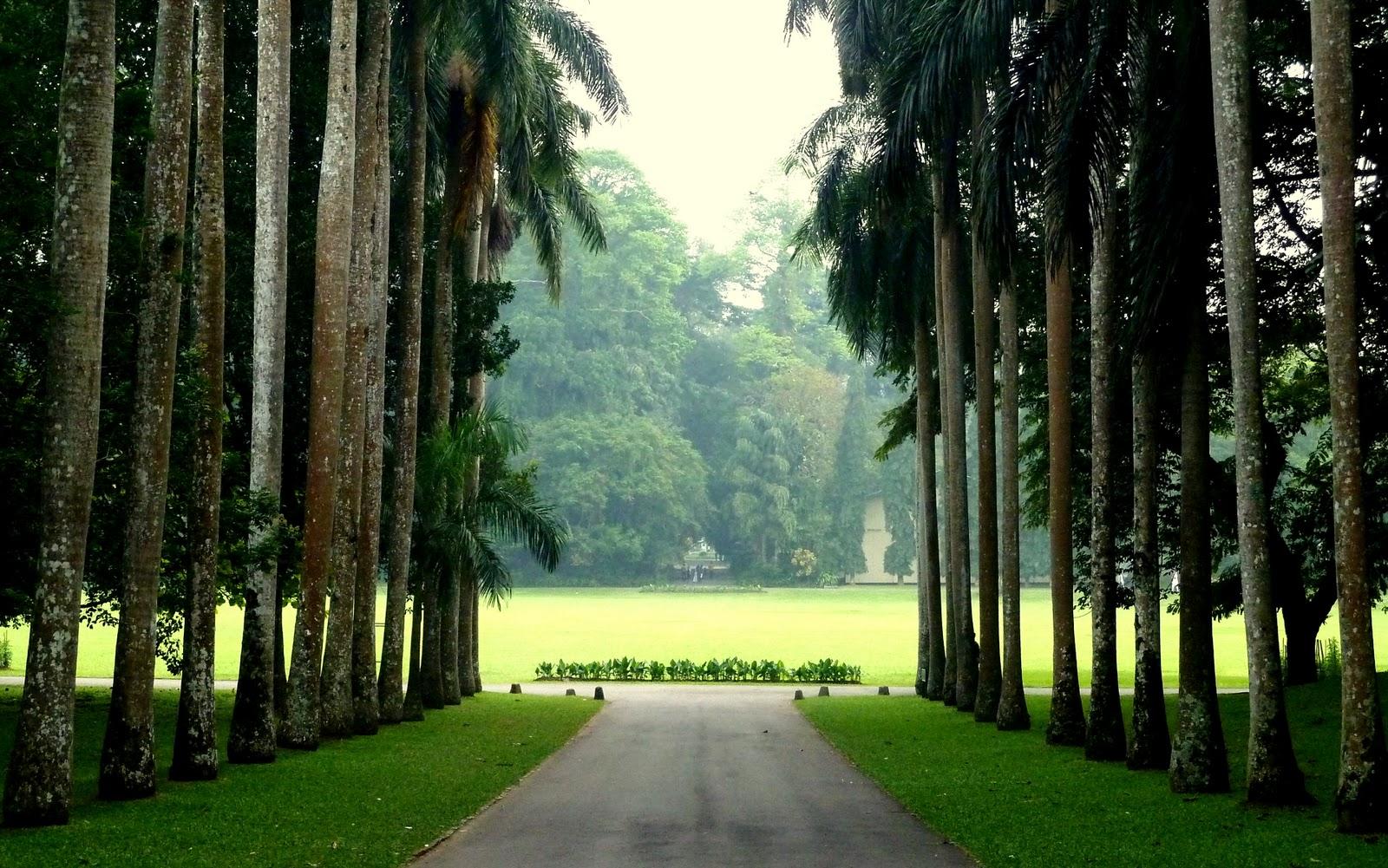 Top 10 Towns To Visit In Sri Lanka Kancando