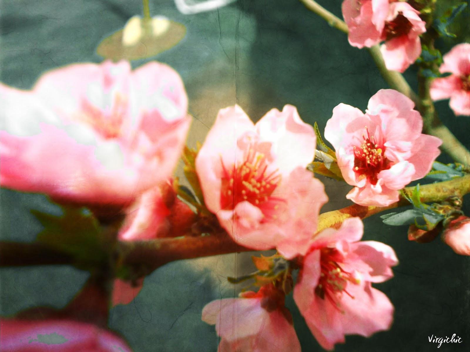Spring 014
