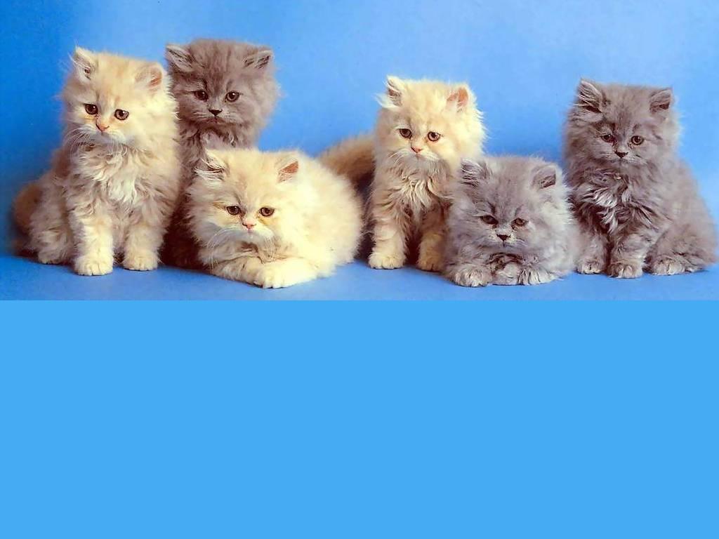 Fondo familia de gatos | Fondos