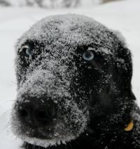 Snowy Jems