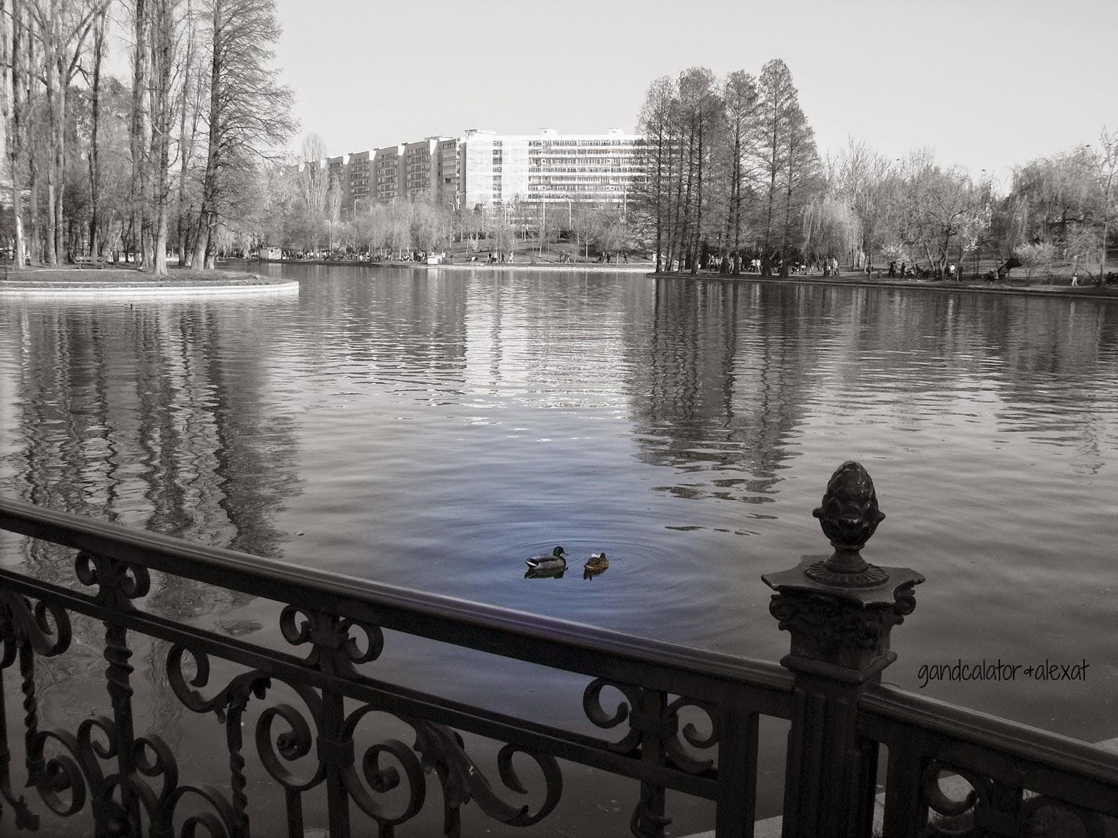 Rate mallard/ A pair of mallard ducks