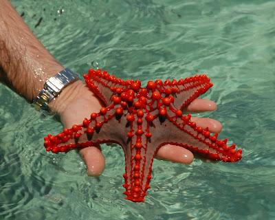 نجم البحر , صور مميزة HD