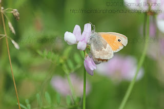 photo macro papillon qui butine une fleur papillon marron