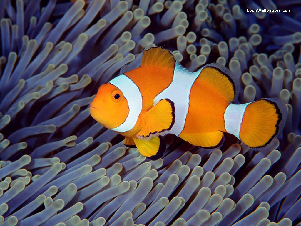 Animals plants rainforest what do clown fish eat let 39 s talk for What do clown fish eat