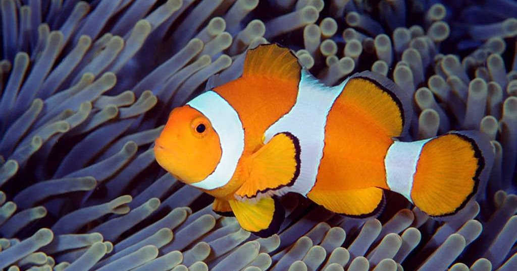 Animals plants rainforest what do clown fish eat let 39 s talk for What does fish eat