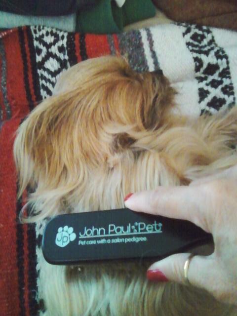Pet Fur Saver Dog Collar Site Petco Com