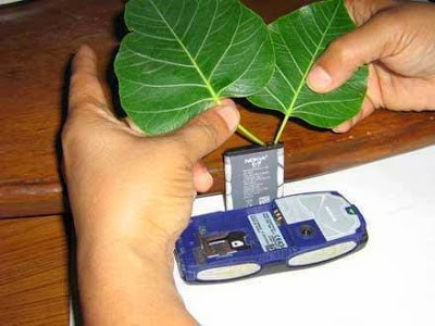 Charging Mobile Phones without Electricity with the Use of Peepal Leaves