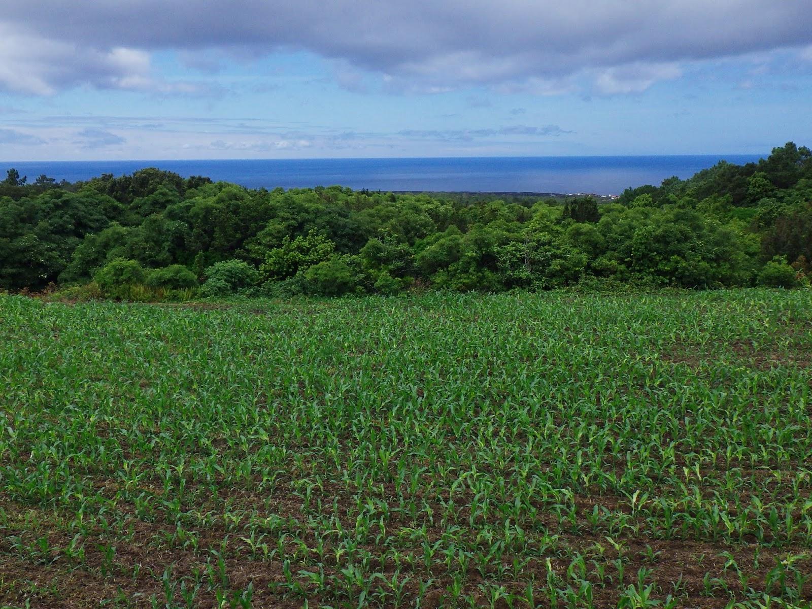 ピコ島の画像 p1_24