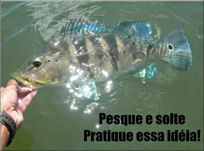Pesque e solte