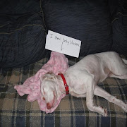 Animal love funny Funny dog shaming (30 pics)