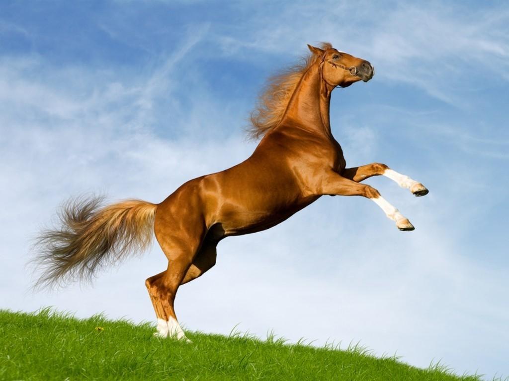 http://4.bp.blogspot.com/-uF6miNPBeYc/T4DzeVCUkfI/AAAAAAAAiXc/-6gf4WhPj8k/s1600/wallpaper-cavalo-salto-2373.jpg
