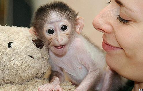 Monkey funny cute - photo#4