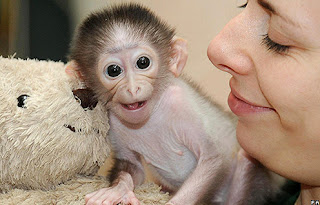 Funny Cute Monkey