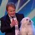 Britain's Got Talent's talking dog Miss Wendy