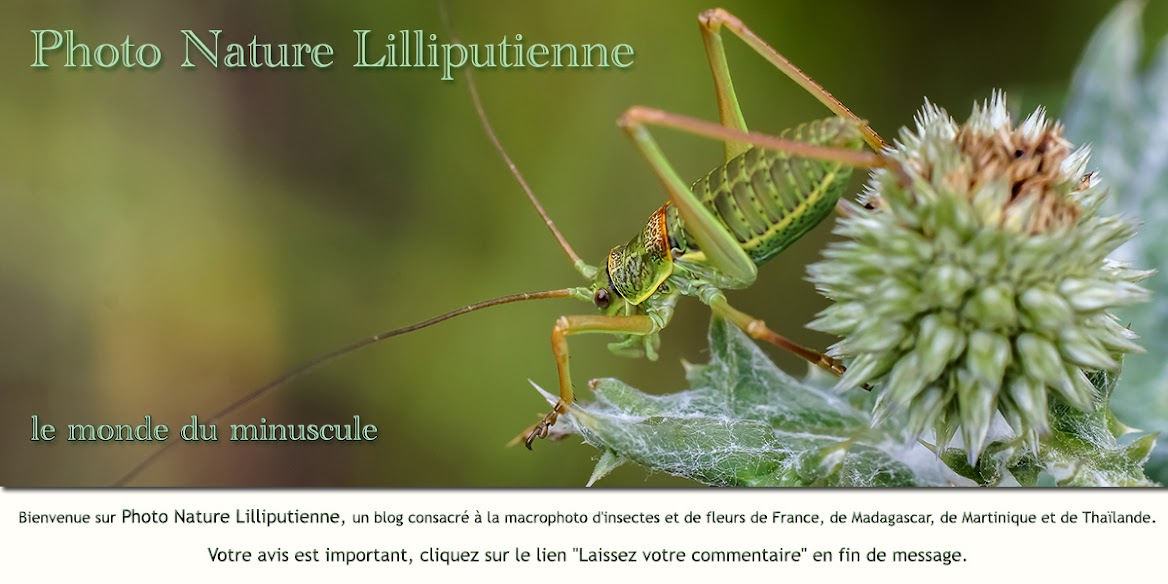 Nature Lilliputienne