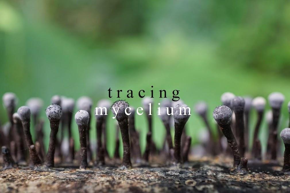 fungus hunting
