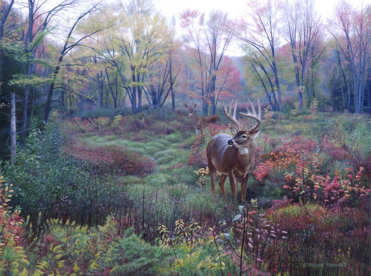Whitetail Woods  September 2013