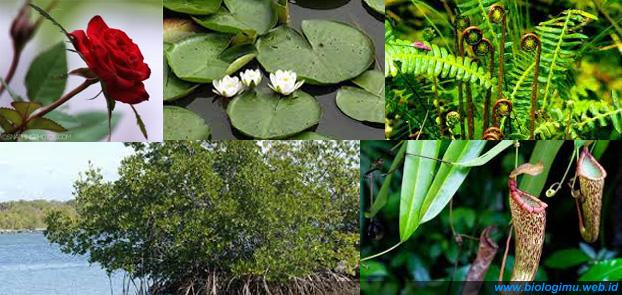 ciri khusus tumbuhan unik dan fungsinya yang menarik