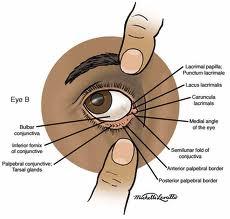 Lower Eyelid