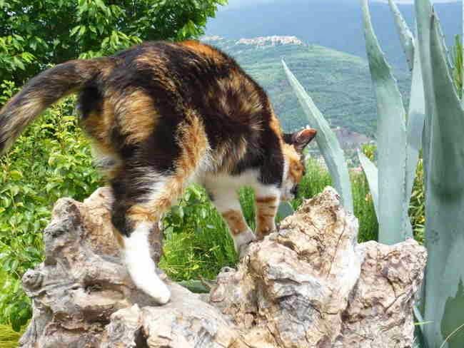 Eine Katze nimmt Reißaus