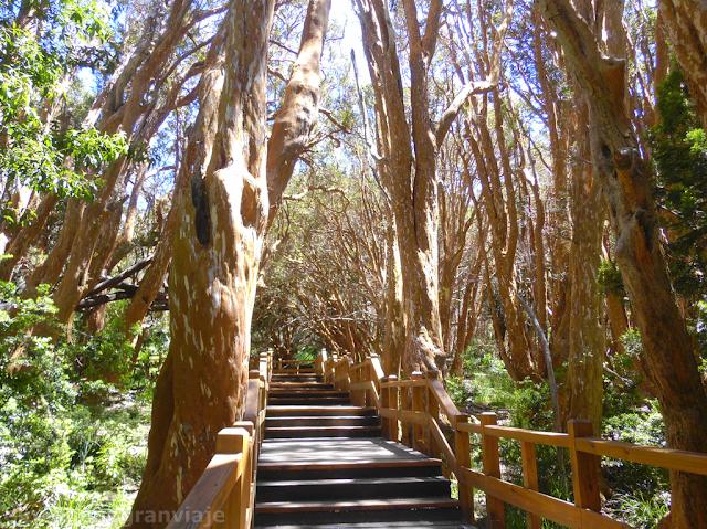 Bosque, Arrayanes, arbol, Villa la Angostura,senda,escalinatas