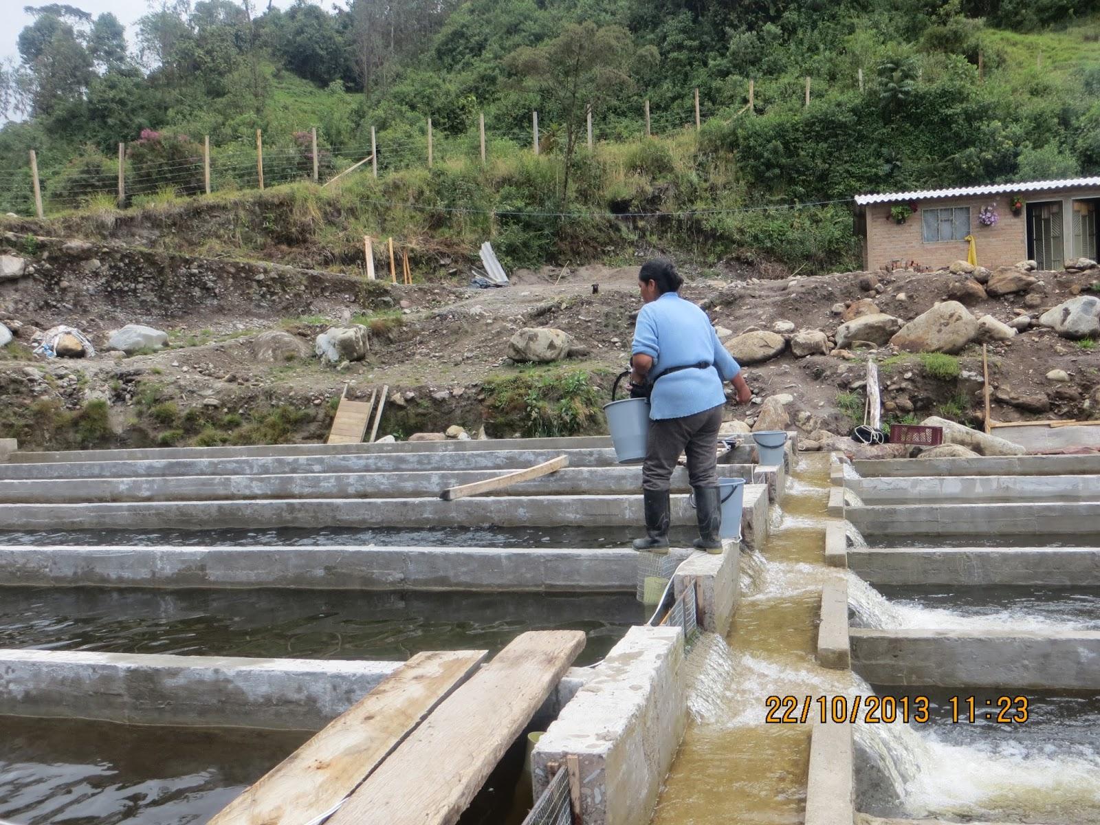 La piscicultura en el municipio de cordoba manejo del cultivo Estanques para piscicultura